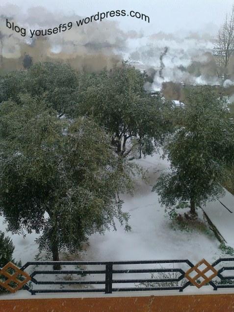 măslinii iarna
