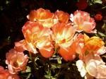 Photo4400 portocalii