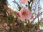 spring time inamman