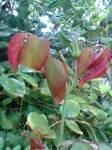 frunzuliţe noi