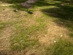 ascult cum creşte iarba
