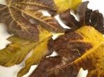 frunze de smochin