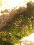 iarba lîngă stînci