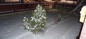 Moş Nicolae a adus zăpadă în grădina copilăriei mele