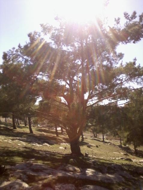 în soare