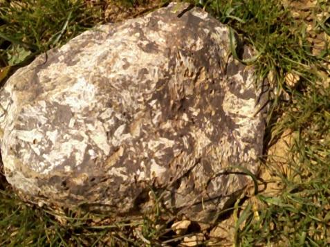iarbă şi piatră
