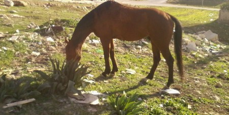 paşte calul lui...priponit de ceva care sigur nu e garofiţă