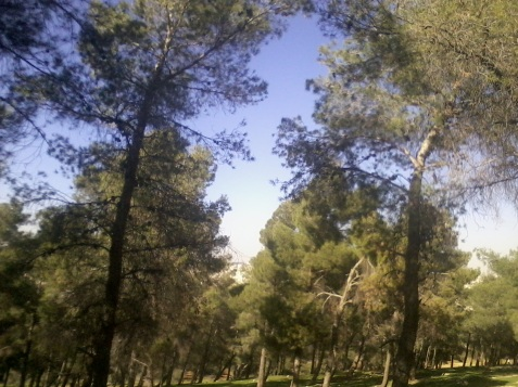 pădure,dragă pădure