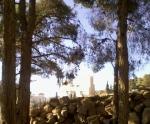 case  dincolo depădure