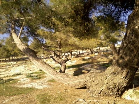 copacul-bancă