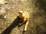 pisica din pădure