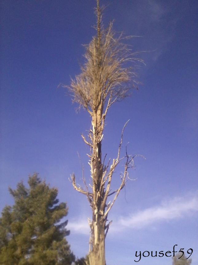 copac uscat