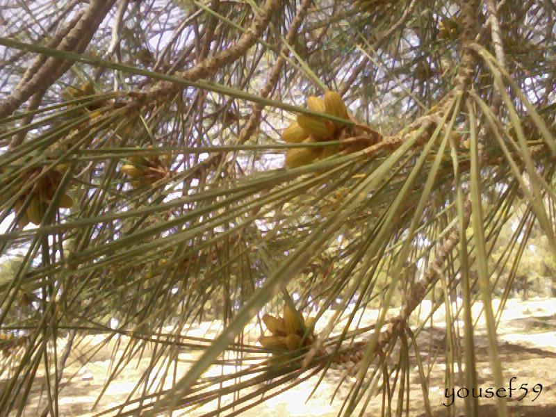 muguri de pin