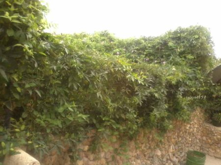 gard imbracat cu plante