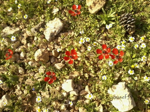 viata printre pietre