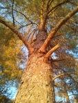 copacul ca si omul