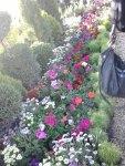 pe langa flori