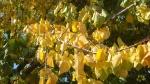 frunze aurii asezate ca dorurile de pe prispasufletului