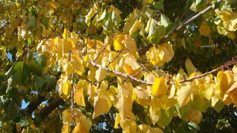 frunze aurii asezate ca dorurile de pe prispa sufletului