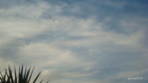 lectie de zbor