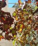 printre frunze demaslin