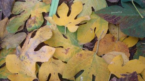 ultimul dans-nici frunzele nu mor la fel