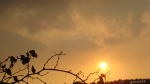 apus de soare prin frunze  de vieuscate