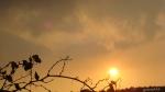 apus de soare prin frunze  de vie uscate