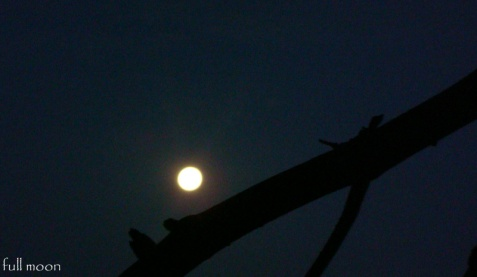 6 dec.2014-dimineata devreme luna plina