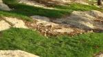 iarba printre stanci