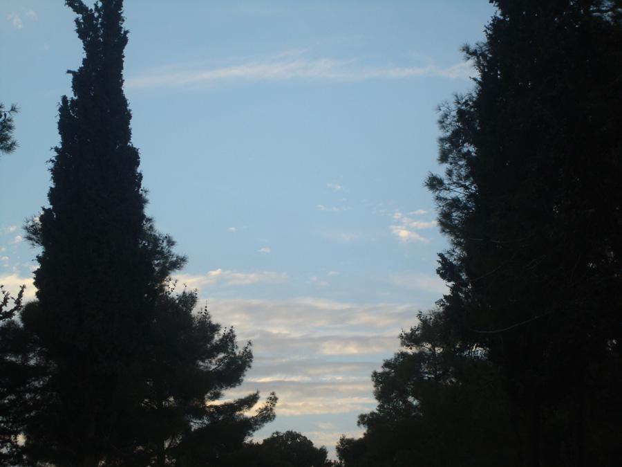 cerul privit printre pini