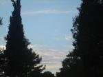 cerul privit printrepini