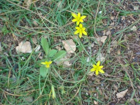 flora spontana din iordania cuprinde peste 2500 de soiuri de plante-unele din cauza lipsei de ploi se pierd