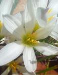 floricele de primăvară