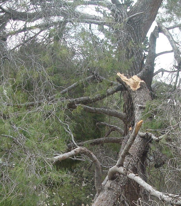 furtuna Huda a rupt multi copaci