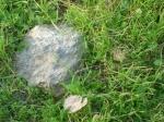 iarba proaspata