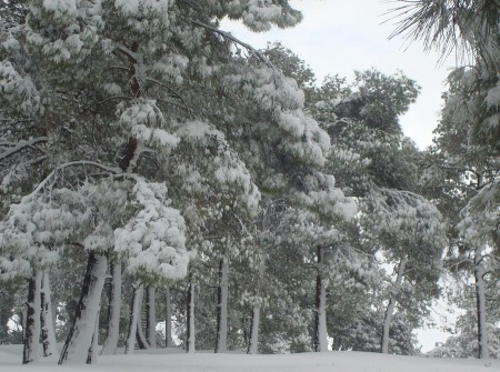jana snowstorm  20 feb.2015