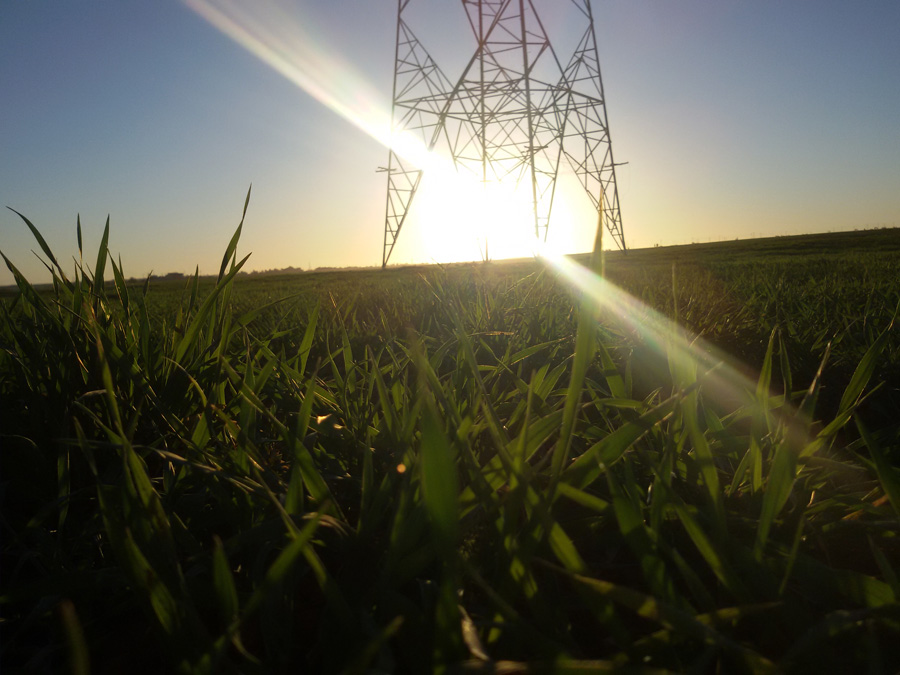 soarele mîngîie verdele indraznet de februarie