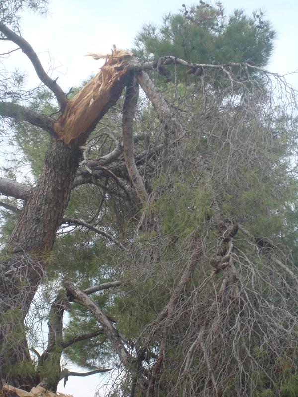 un alt copac rupt
