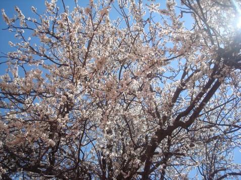 Cer albastru de primăvară şi flori parfumate.