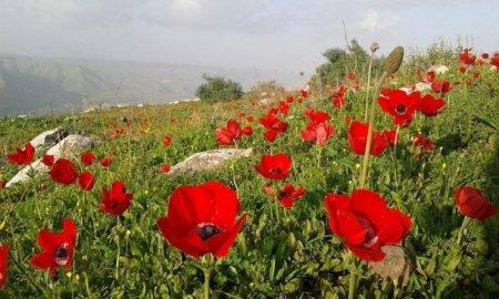 Spring in Jordan-Irbid um qais