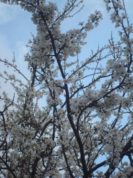 Să se ducă primăvara la toţi cei care o doresc... şi ea a cam întîrziat prin unele locuri.