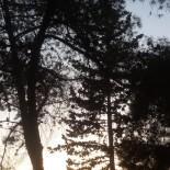 La margine de pădure