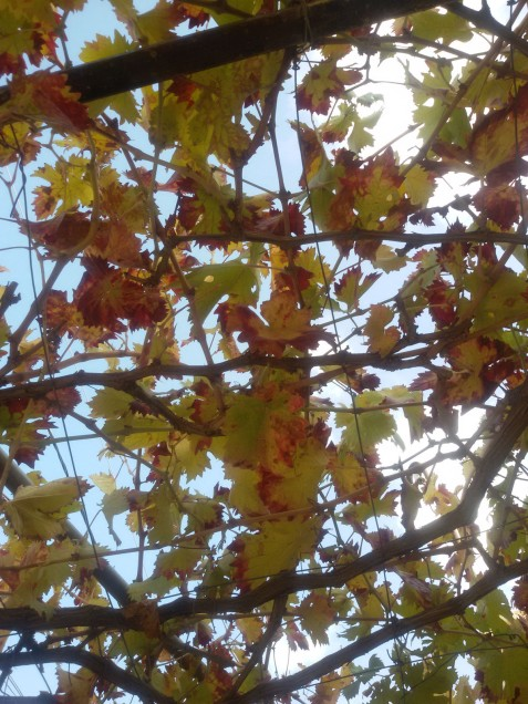 frunze-de-decembrie