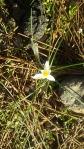 alone in spring