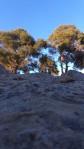 rezistenta copacilor