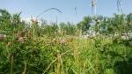 iarba verde deacasa
