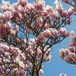 la echinoctiul de primavara